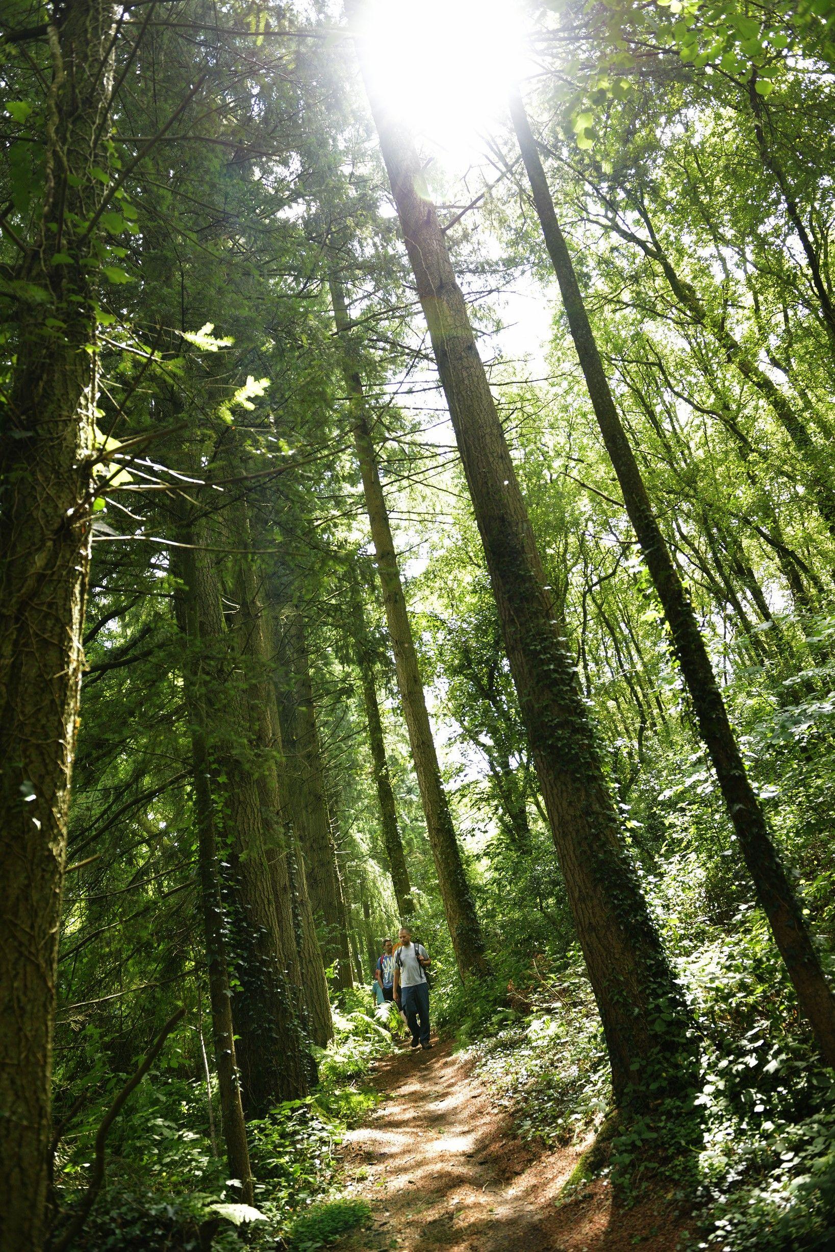 forêt de la Maha